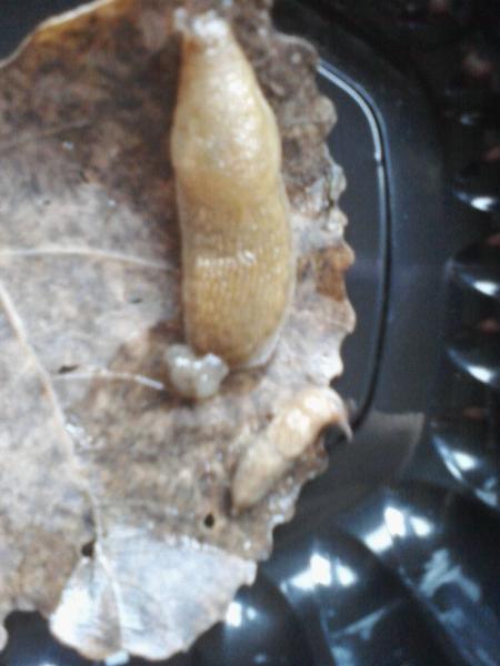 Both_slugs