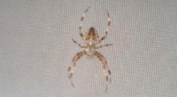 Close_up_of_spider