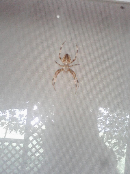 Far_away_pic_of_spider