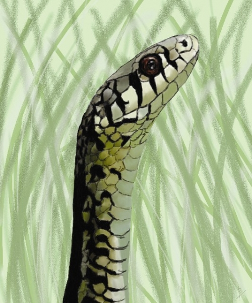 GARTER_SNAKE_COMPLETED_CYMK_Quick_e-mail_view