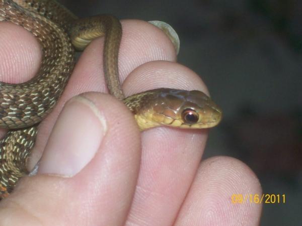 moms snake 1