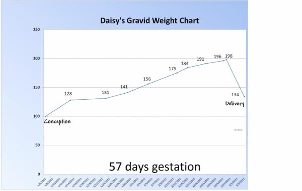Daisy_s_chart