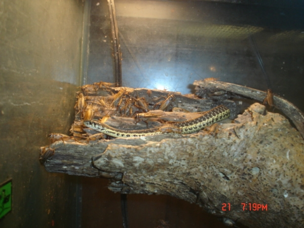 Basking with crickets