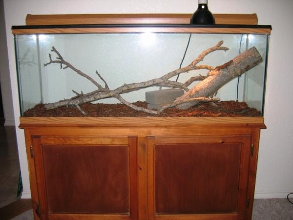 Lizard_tank