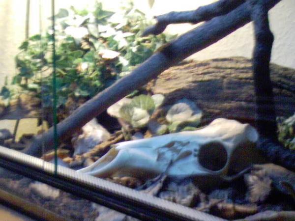 my terrarium for thamnophis sirtalis parietalis!!!