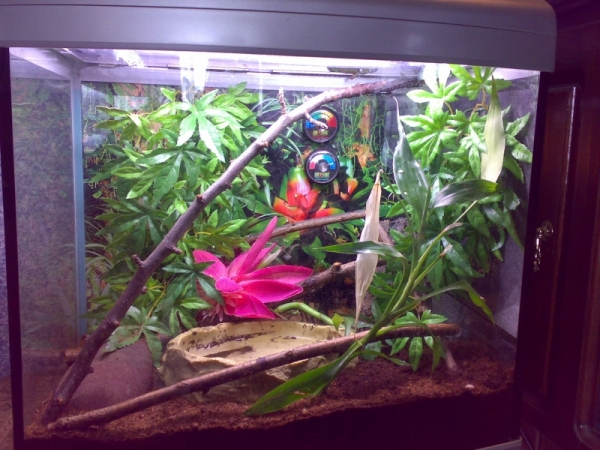 frog22