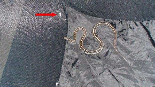 hamper_snake
