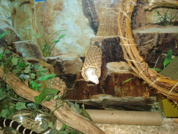 mouse_in_des_tank_004_resize