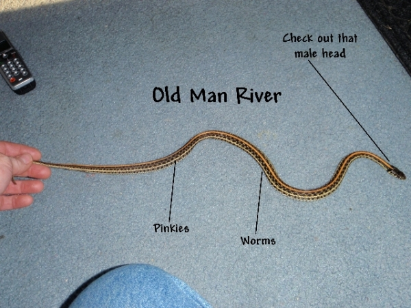 old_man_river