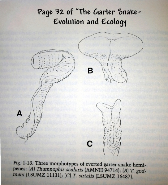 snake_male_parts