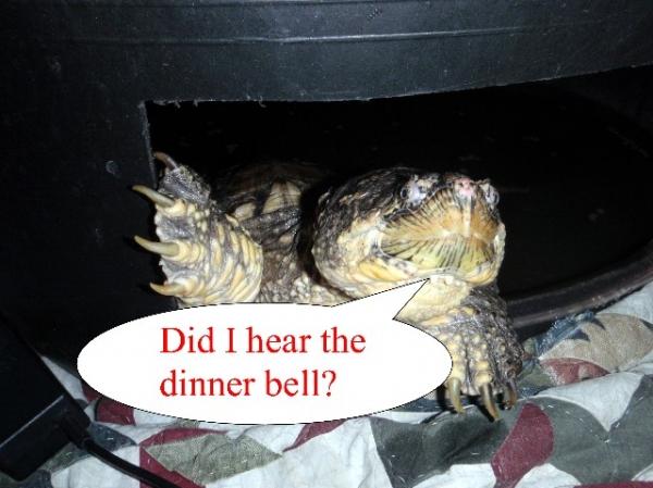 tank_dinner_bell