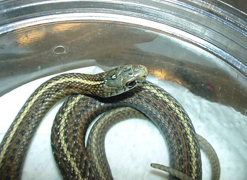 mex_mt_snake2
