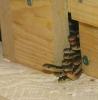 Snakes_028.jpg