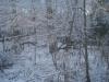 Snow_1_20_2008_003.jpg