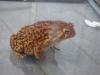 Toad_2.jpg