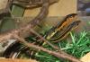 new_snakes_004.jpg