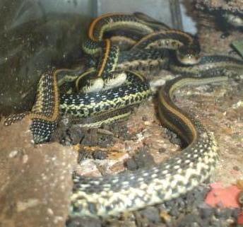 Sues_vivarium_Snakes_0061