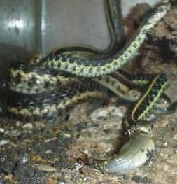 Sues_vivarium_Snakes_0111